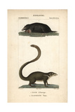 Mole And Treeshrew From Frederic Cuvier's Dictionary of Natural Science: Mammals, Paris, 1816 Giclee Print
