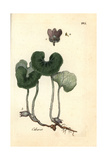 "European Wild Ginger, Asarum Europaeum, From Pierre Bulliard's ""Flora Parisiensis,"" 1776, Paris Giclee Print by Pierre Bulliard"