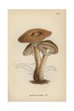 Hallimasch Mushroom, Agaricus Melleus Giclee Print by Mordecai Cubitt Cooke