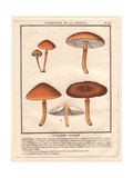 Agaric Mushroom, Agaricus Ochraceus Giclee Print by Pierre Bulliard