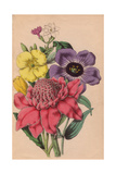 Jasmine, Oenothera, Lisianthus And Alpinia Giclee Print by James Andrews