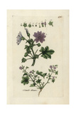 "Common Mallow, Malva Sylvestris, From Pierre Bulliard's ""Flora Parisiensis,"" 1776, Paris Giclee Print by Pierre Bulliard"