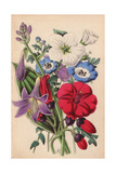 Ipomoea, Nemophila, Flax And Funkia Giclee Print by James Andrews