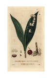 "Lily of the Valley, Convallaria Majalis, From Pierre Bulliard's ""Flora Parisiensis,"" 1776, Paris Giclee Print by William Delamotte"