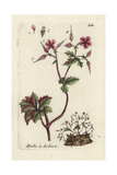 Herb Robert, Geranium Robertianum Giclee Print by Pierre Bulliard