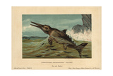 Ichthyosaurus Communis, Extinct Nektonic Carnivore of the Jurassic Giclee Print by F. John