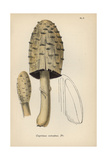Maned Agaric, Coprinus Comatus Giclee Print by Mordecai Cubitt Cooke