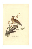 Wood Lark, Lullula Arborea Giclee Print by George Graves