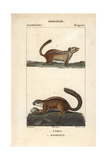 Chipmunk And Tree Squirrel From Frederic Cuvier's Dictionary of Natural Science: Mammals Giclee Print