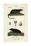 Russian Desman And Eastern Mole From Frederic Cuvier's Dictionary of Natural Science: Mammals Giclee Print