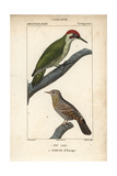 Green Woodpecker And Wryneck From Sainte-Croix's Dictionary of Natural Science: Ornithology Giclee Print