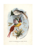Asian Paradise-flycatcher Giclee Print