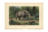 Mastodon, a Large Tusked Mammal Species of the Extinct Genus Mammut Stampa giclée di Heinrich Harder
