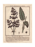 Meadow Clary Or Meadow Sage, Salvia Pratensis Giclee Print by Pierre Bulliard
