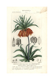 Crown Imperial, Fritillaria Imperialis Giclee Print by Pierre J-F Turpin