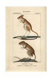 Egyptian Jerboa And Jumping Mouse From Frederic Cuvier's Dictionary of Natural Science: Mammals Giclee Print