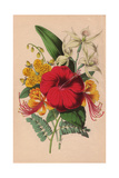 Poinciana, Chinese Hypericum, Crimson Hibiscus And Epidendrum Orchid Giclee Print by James Andrews