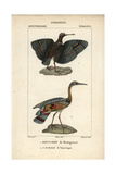 Painted Snipe And Sunbittern From Sainte-Croix's Dictionary of Natural Science: Ornithology Giclee Print