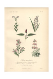 Forget-me-not, Grass, Water Knotweed, Pink Willowherb And Water Violet Giclee Print by Edouard Maubert