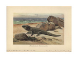Hatteria Or Tuatara, a Living-fossil Reptile Native To New Zealand Giclee Print by Heinrich Harder