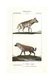 Striped Hyena, Hyaena Hyaena, And Spotted Hyena, Crocuta Crocuta Giclee Print by Jean Gabriel Pretre