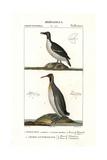 Razorbill, Alca Torda, And Emperor Penguin, Aptenodytes Forsteri Giclee Print by Jean Gabriel Pretre