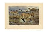 Wild Horses of the Diluvial Era, Extinct Genus of Equus Ferus Giclee Print by Heinrich Harder