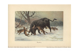 A Long-horned European Wild Ox Attacked by Wolves Giclee Print by Heinrich Harder