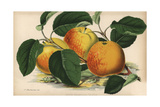 Apple, American Mother Variety, Malus Domestica Giclee Print by J.L. Macfarlane