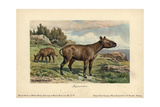 Hyracodon, An Extinct Genus of Fast-running, Pony-like Mammal Giclee Print by Heinrich Harder