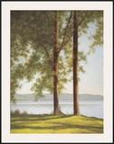 Sunlit Trees II Posters by John Folchi