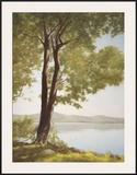 Sunlit Trees I Art by John Folchi