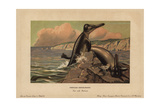 Basilosaurus (Zeuglodon), Extinct Genus of Cetacean From the Eocene Giclee Print by F. John