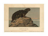 Hylaeosaurus, Extinct Genus of Herbivore From the Cretaceous Giclee Print by F. John