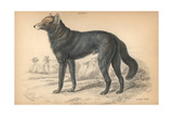 Great Plains Wolf From Jardine's Naturalist's Library, 1837 Giclee Print