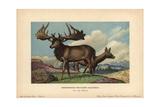 Irish Elk Or Giant Deer, Reisenhirsch, Megaceros Giganteus Giclee Print by F. John