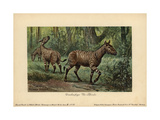 Hypohippus, Extinct Genus of Three-toed Horse Giclee Print by Heinrich Harder