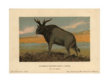 Sivatherium, Sivatherium Giganteum, Extinct Genus of Giraffid Giclee Print by F. John