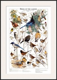Birds of the Garden Winter II Prints