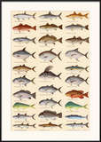 Game Fish of the Saltwater Flats and Shallows Print