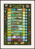 Eras Of Life Chart Posters