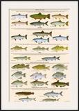 Great Lakes Sportman's Game Fish Prints