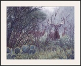 Lone Star Whitetail Framed Giclee Print by John Banovich