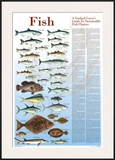 A Seafood Lover's Guide to Sustainable Fish Choices Print by Brenda Gillespie