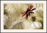 Whisper on the Wind Framed Giclee Print by David Winston