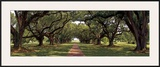 Enchanted Oaks Prints by Mike Jones