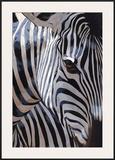 Zebra Stripes Posters by P. Charles