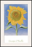 Sunflower, New Mexico, c.1935 Posters by Georgia O'Keeffe