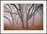 Pilot Road Trees Framed Giclee Print by David Winston
