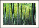 The Bamboo Grove Poster by Robert Churchill